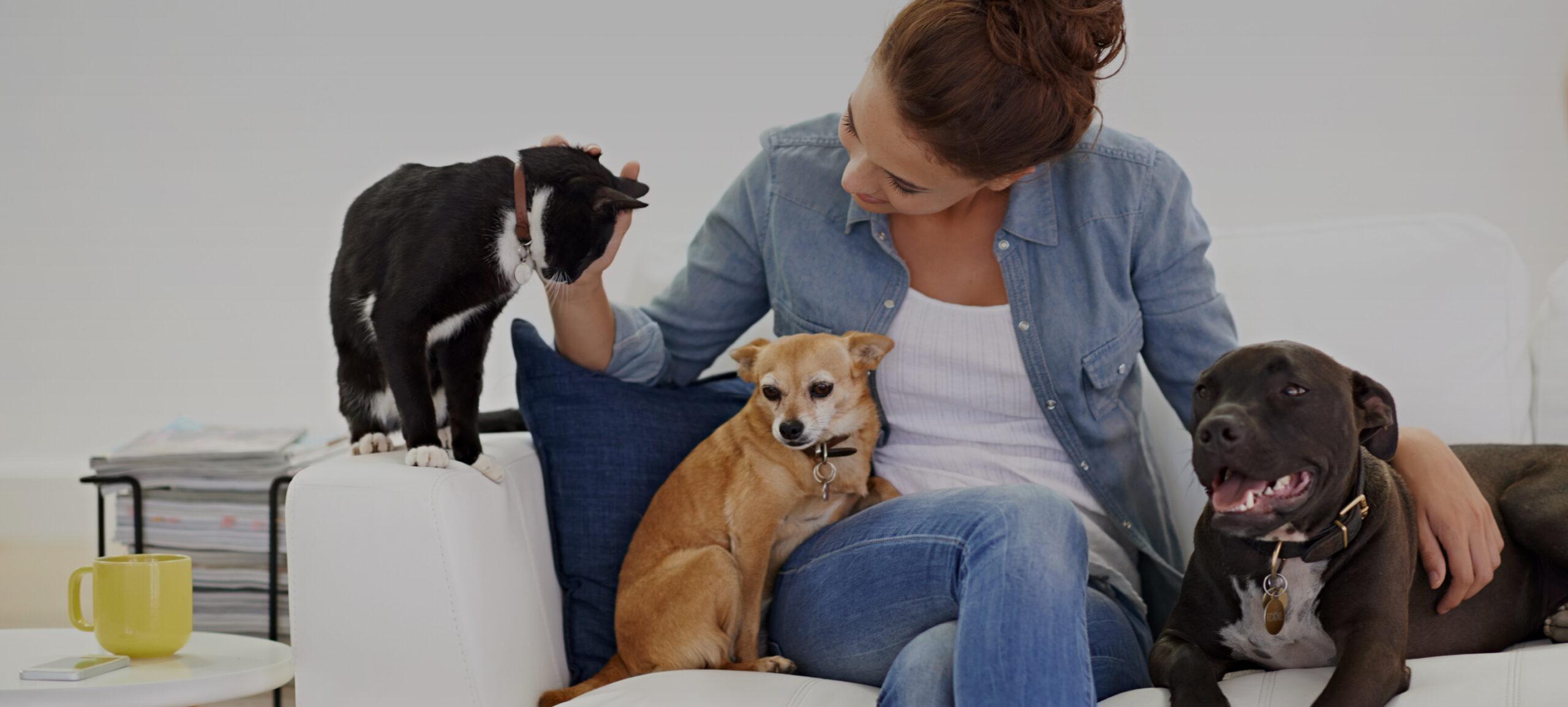 Frau auf Sofa mit Katze und zwei Hunden