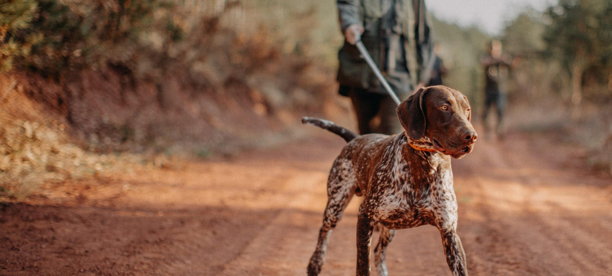 Jäger mit Jagdhund auf Waldweg