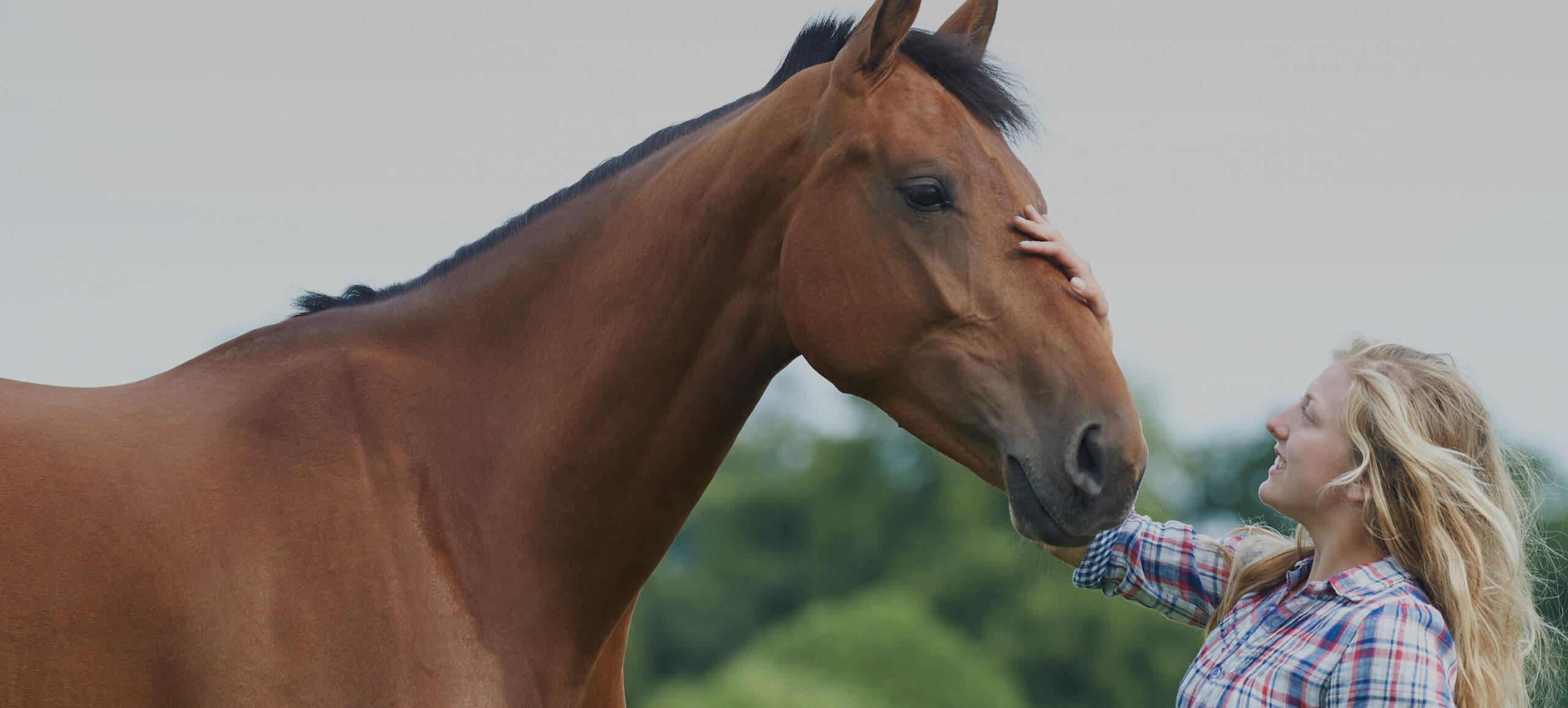 Frau streicht über den Kopf eines Pferdes