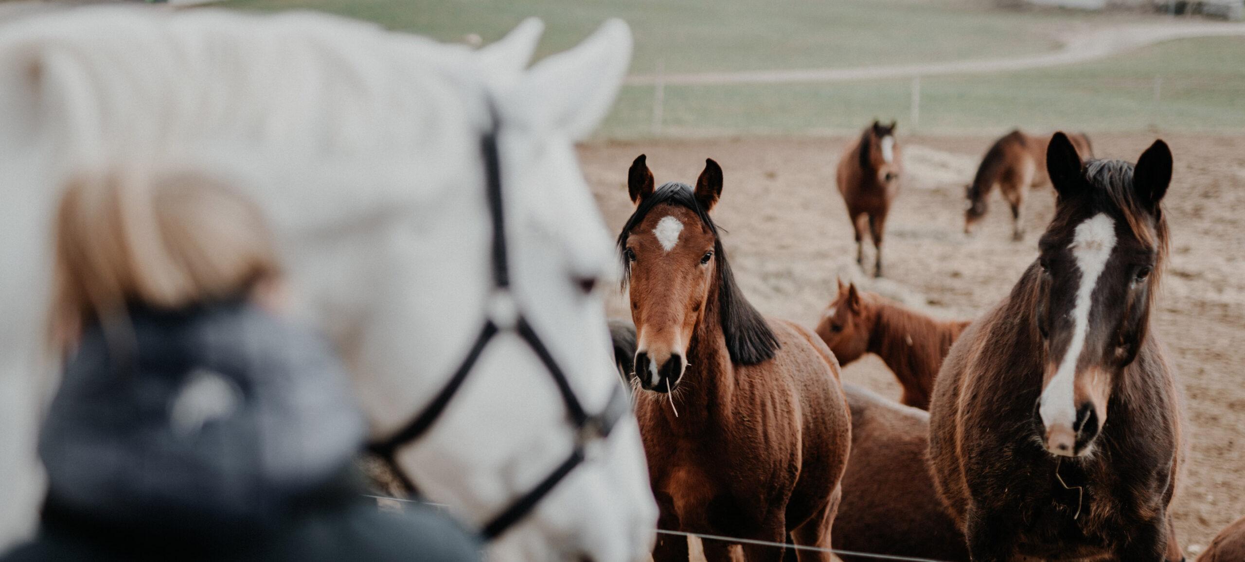 Pferde auf Reitplatz