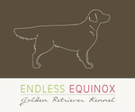 "Golden Retriever Zucht ""Endless Equinox"""