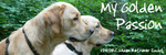 "Golden Retriever Zucht ""My Passion"""