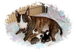 Miniature Bullterrier Little Dragonheart