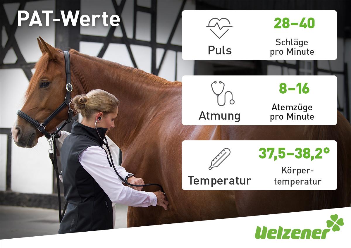 Husten, Nasenausfluss & Fieber beim Pferd   Uelzener