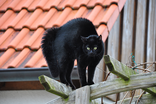 Und mit kopf katze augen wackelt Warum schüttelt