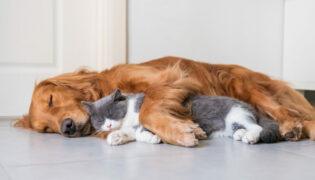 Brauner Hund und graue Katze kuscheln